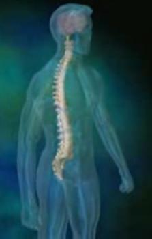 human_spine_1.jpg