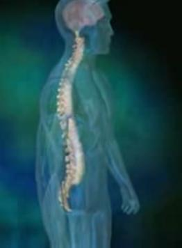 human_spine_2.jpg